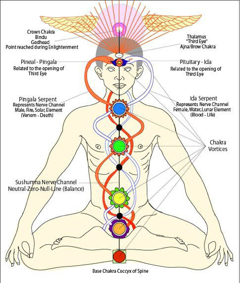 Ida and Pingala Nadis crisscrossing at the chakras